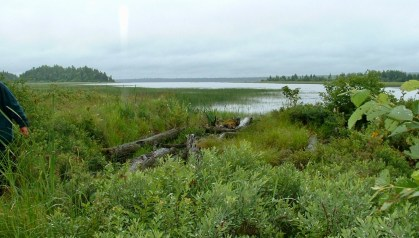 Shore of Eagle Lake, Allagash Wilderness Waterway, Maine.