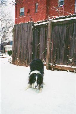 tigger and snow