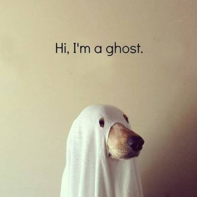 halloween dog ghost