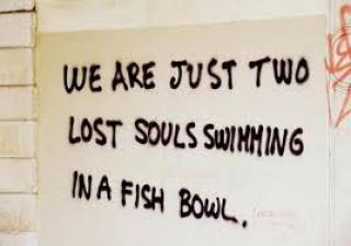 misfit lost souls fishbowl life conform