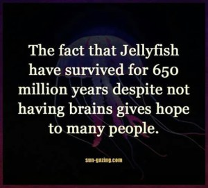 no brains stupid people jellyfish