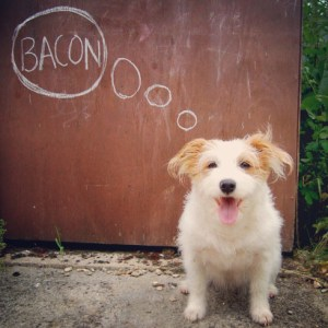 dog bacon thoughts desires