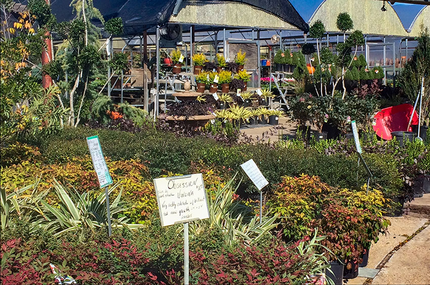 Plants at Bruce Miller Nursery