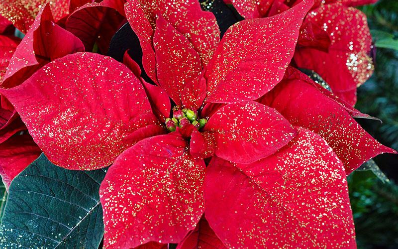 December Gardening Tips
