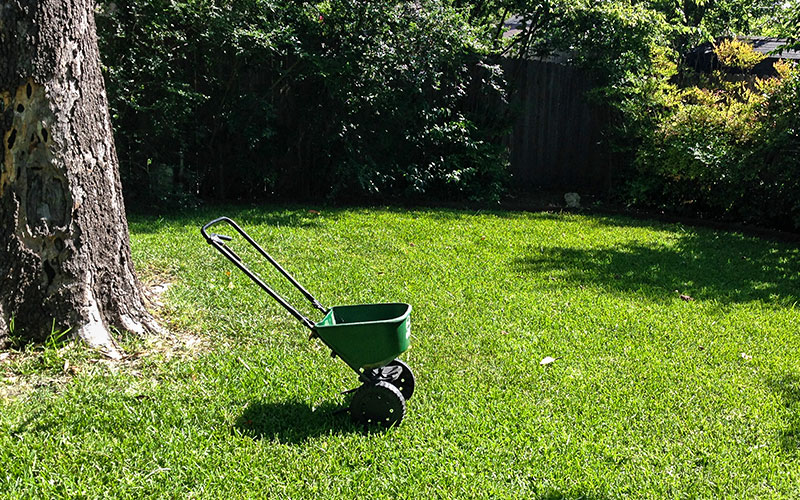 Bruce Miller Nursery August Gardening Tips