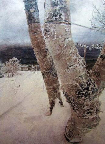 Cold Birch Shore - Phillip Connolly