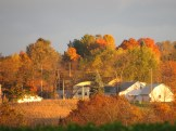 Fryburg, fall leaves, sugar maples, Bruce Stambaugh, Holmes County Ohio