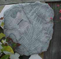 FossilArt