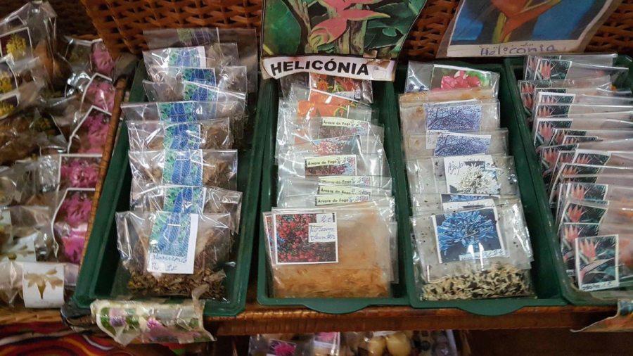 Pflanzensamen von Madeira