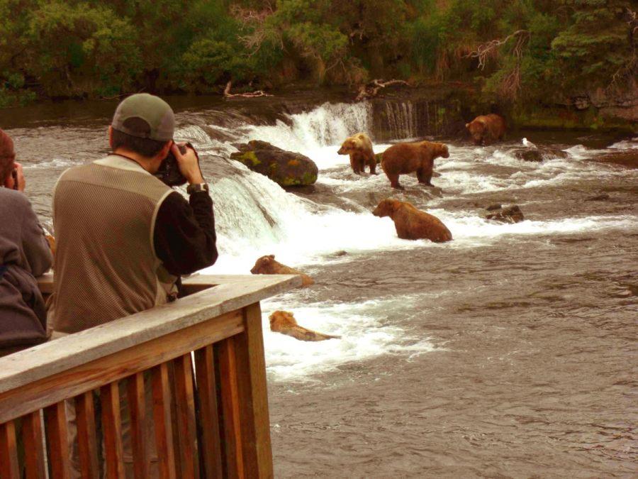 Bären bei den Brooks Falls in Alaska