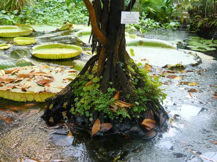 Baum in der Mitte des Teichs