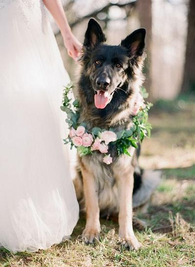 Bruiloft hondjes met bloemen