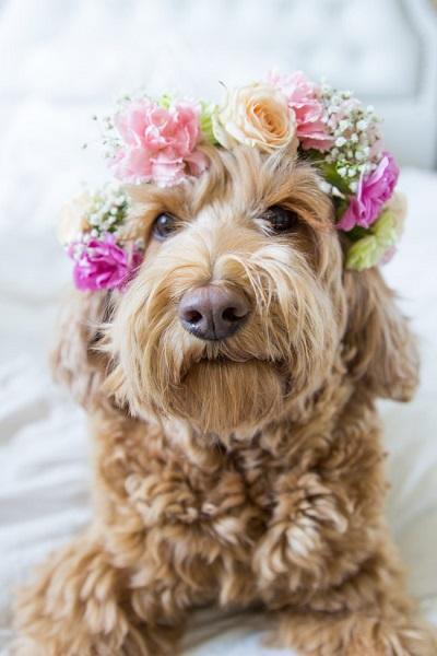 Bruiloft honden met bloemenkrans
