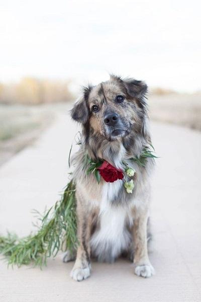 Hond met bloemenkrans