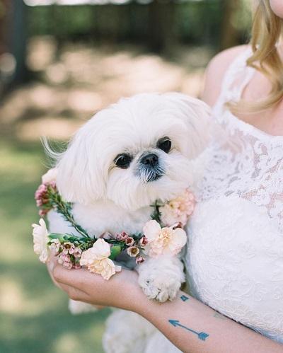 Bruid met hondje