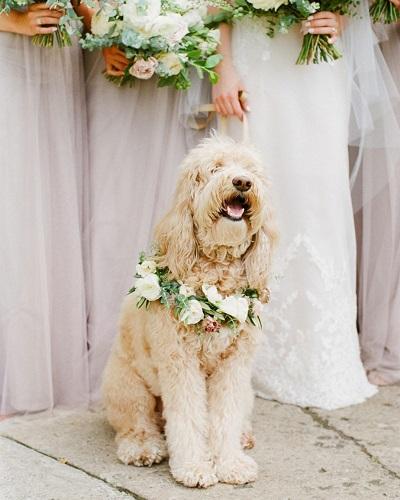 Hond met bruidsmeisjes