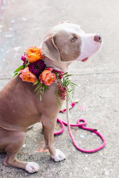 Bruiloft hond met bloemenkrans