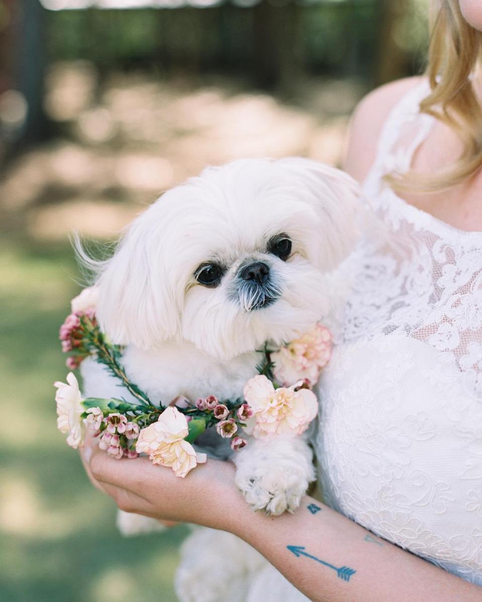 Bruid met hondje en tatoeage