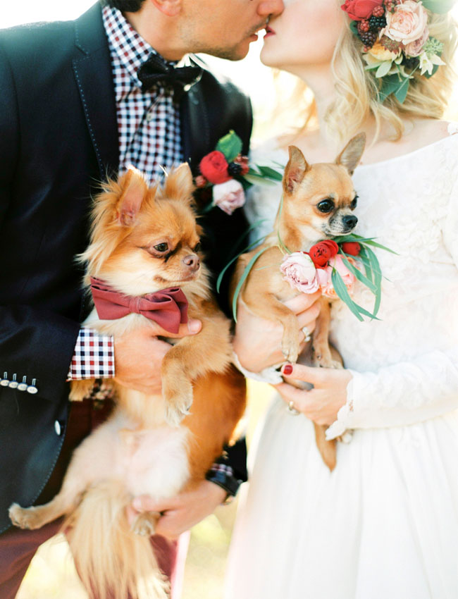 Bruidspaar met twee honden
