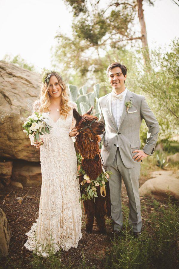 Bruidspaar met bruine alpaca