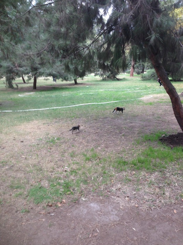 Cats at Orman Park.