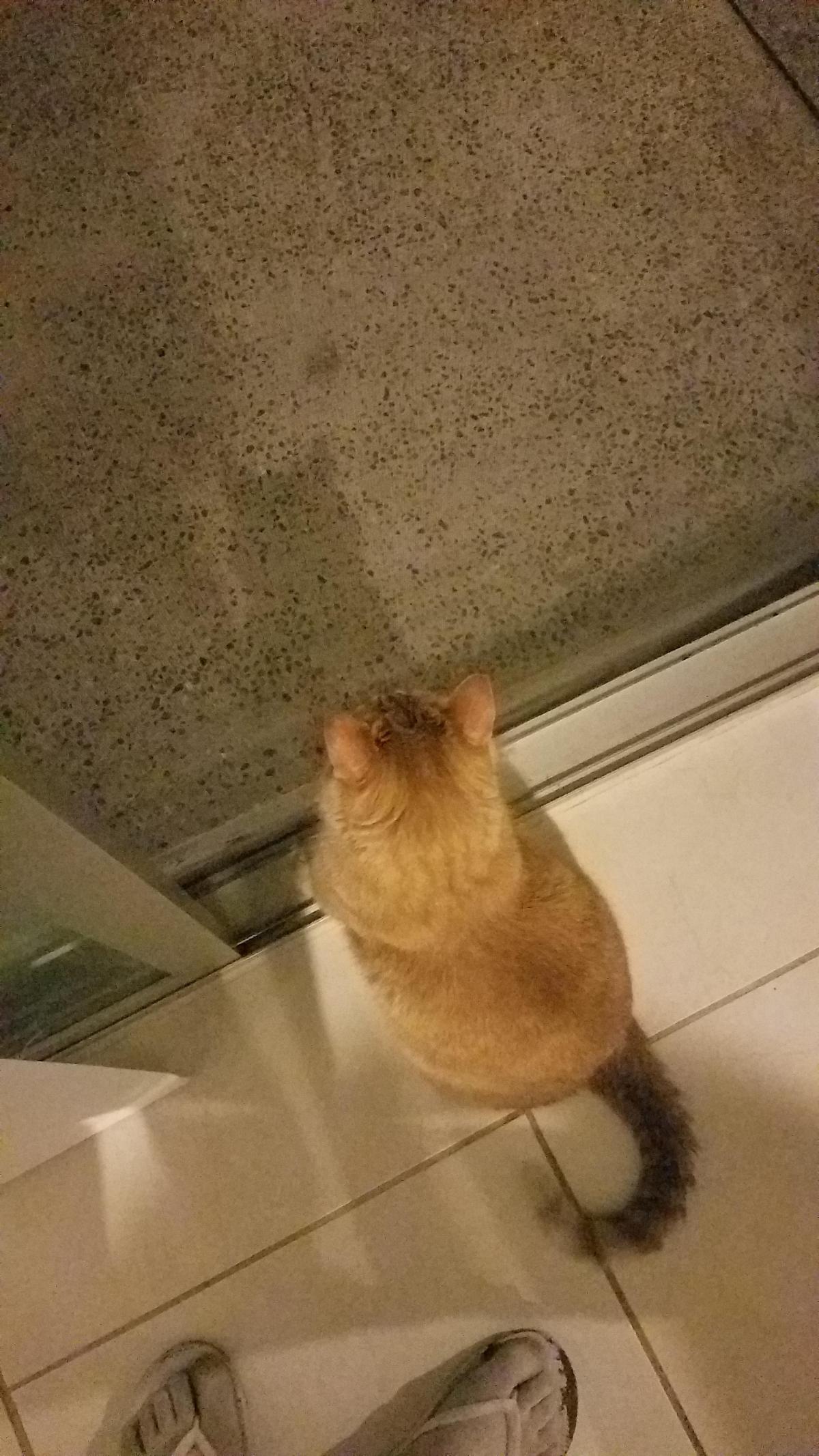 Garfield in Mazatlan: The Joys of Pet Friendly Accommodation