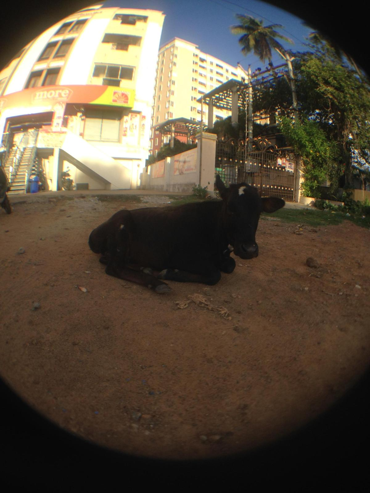 Chennai, India — By Jennifer Shipp