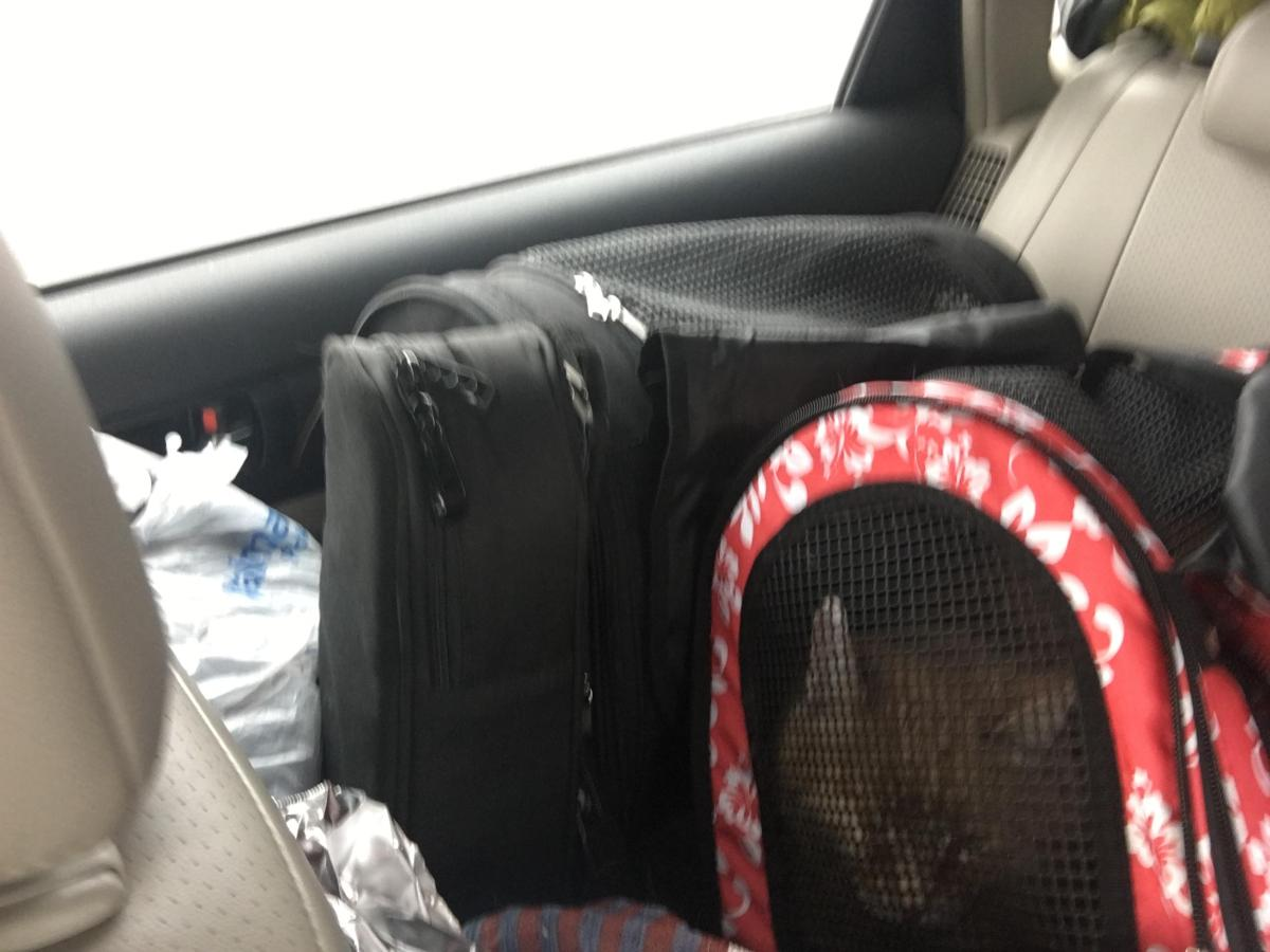 Traveling with Pets: The Kitties in Arizona