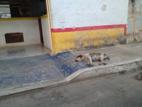 Rabies Encounters: On Caring for Random Sick Animals in Developing Nations