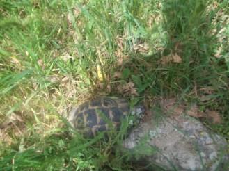 Troy Ruins Turkey Turtles
