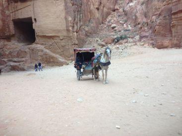 Petra Jordan Horses