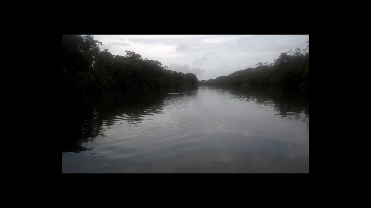 In the Rainforest on an Amazon River Tributary