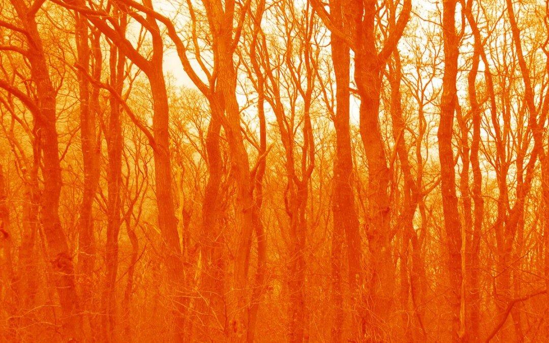 Velvet wood # 3