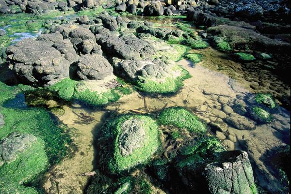 glony na kamieniach wygladaja niczym wysepki widziane z lotu kalosza / algae on the rocks looks almost like swarm of islands viewed from aircraft