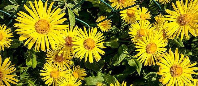 Foto: gelbe Blumen