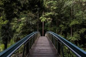 photo-bridge