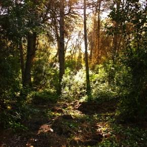 Noviembre en el bosque