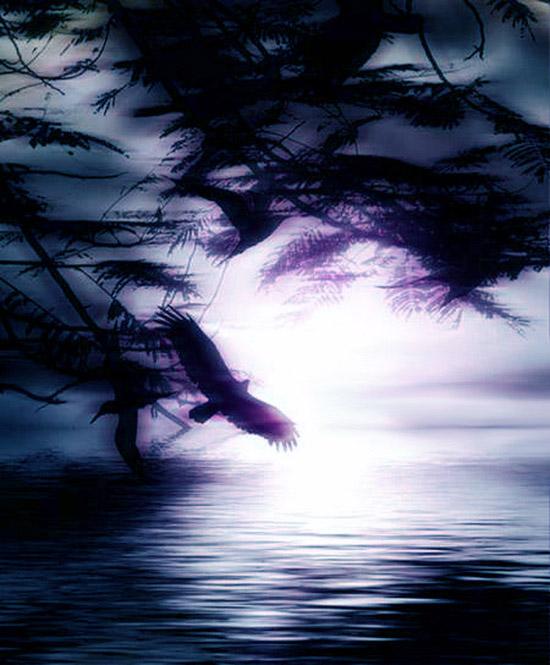 oiseaux-nuit_2013_a1