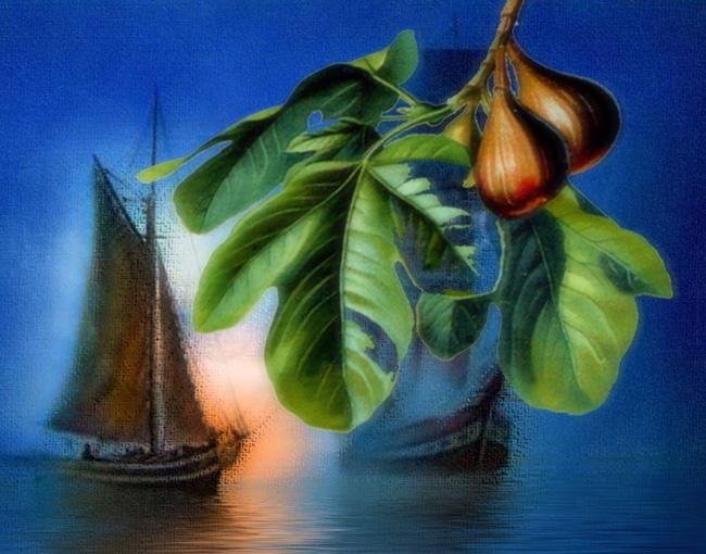 Ficus_carica_bateaux