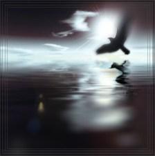 oiseau_ocean_nuit_cadre_web_bruno-rigolt