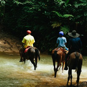 horse back riding tocori waterfall horses