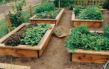 learn_raised_bed_garden
