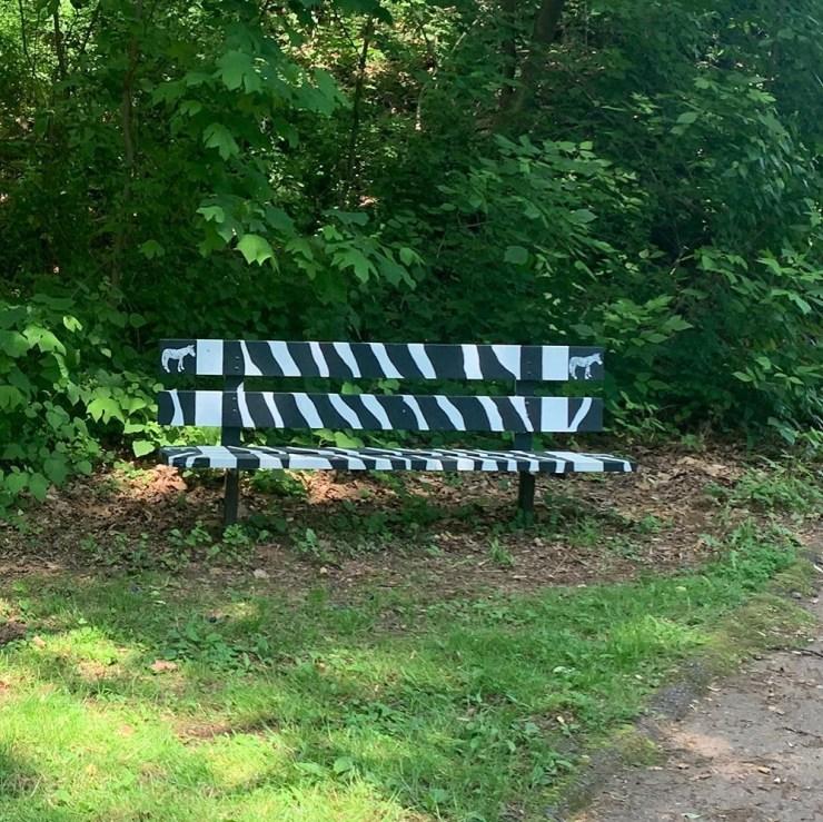 an eye catching zebra design to an ordinary park bench