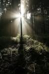 wald 12 licht und schatten