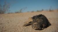 bombay-beach_krokodil