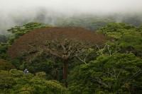 Geheimnis-Bäume-Bild02