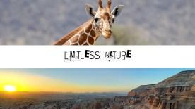 Limitless nature edition bruxelles art vue