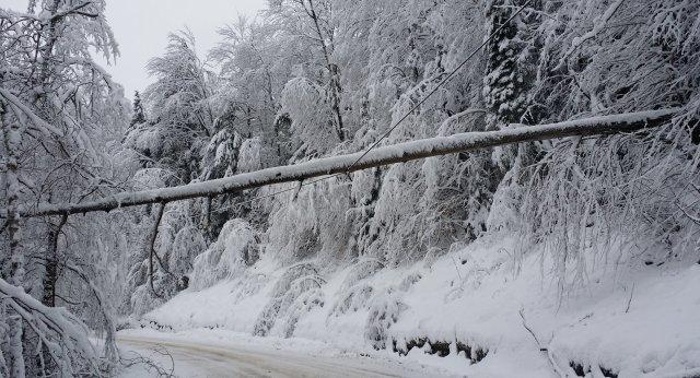 tree on line