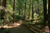 Muir Woods S13