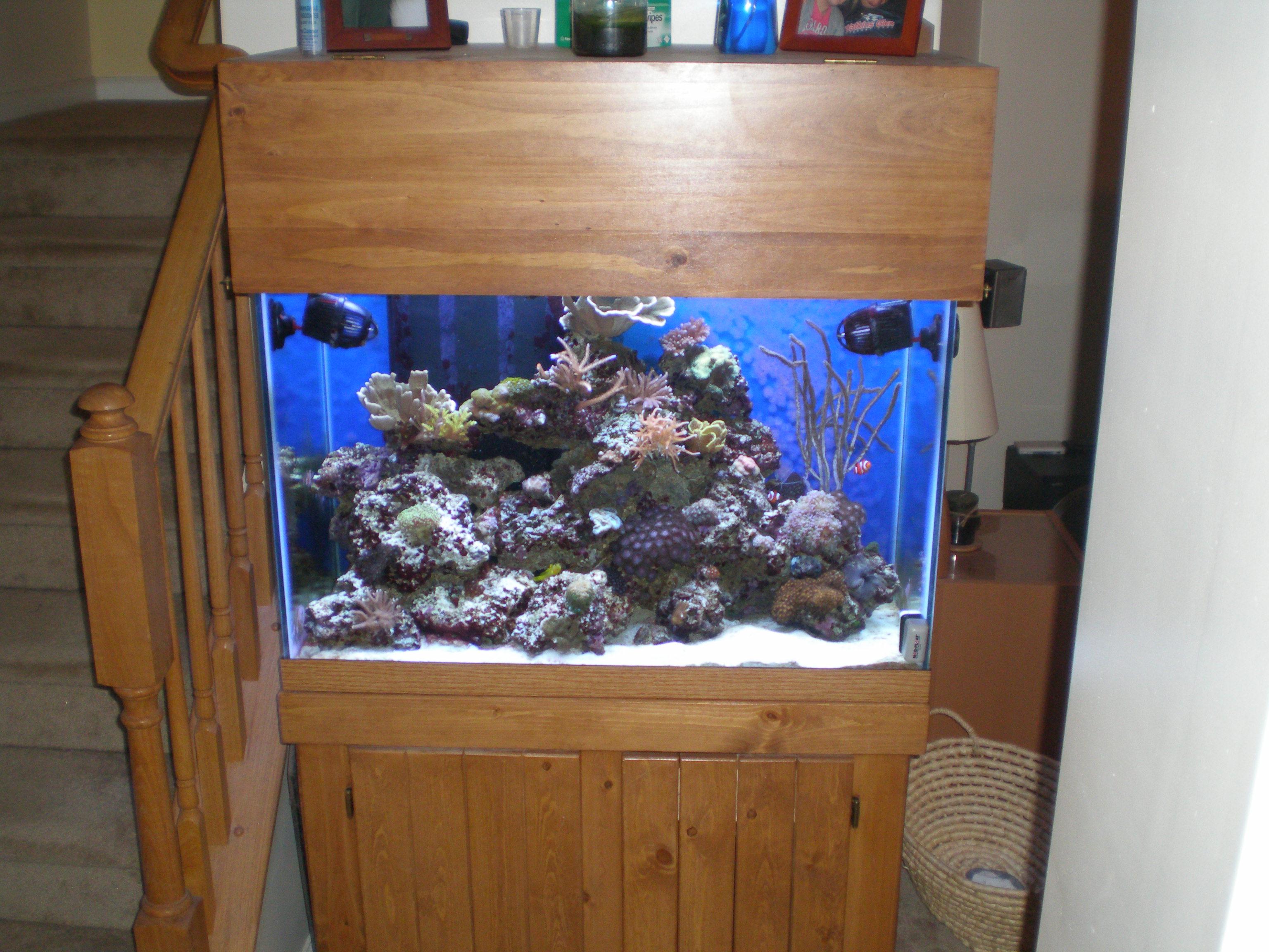 Reef Aquarium 3 0 » The Brain of Bryan